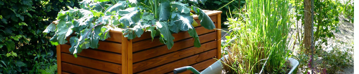 Treated Wood and Your Raised Bed Gardens